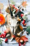 叶子和蘑菇在头骨和委员会附近 库存图片