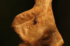 叶子和蚂蚁 免版税库存图片