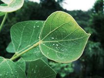 叶子和雨 免版税库存图片