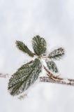 叶子和雪花的弗罗斯特 免版税库存照片