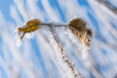 叶子和雪花的弗罗斯特 免版税图库摄影