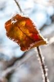 叶子和雪花的弗罗斯特 免版税库存图片