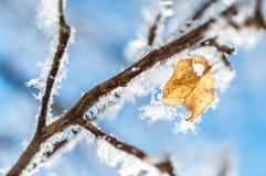 叶子和雪花的弗罗斯特 库存图片