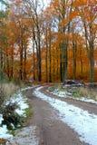 叶子和雪被涂上的被扭转的森林足迹 库存照片