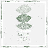 叶子和绿茶词 库存照片