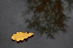 叶子唯一橡木的池 图库摄影
