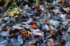叶子在一个冷和冷淡的早晨 免版税库存照片