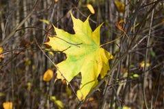 叶子在一晴朗的秋天天 图库摄影