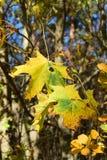 叶子在一晴朗的秋天天 免版税库存图片