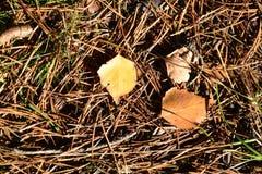 叶子在一晴朗的秋天天 库存图片
