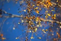 叶子在与蓝天的秋天 免版税库存图片