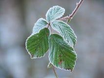 叶子在冬天 库存照片