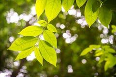 叶子在准备好一新的天在将来增长 库存图片