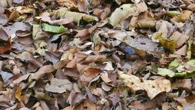 叶子在地面上烘干 影视素材