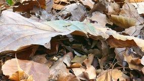 叶子在地面上烘干 股票视频