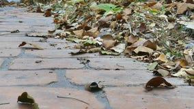 叶子在地面上烘干 股票录像