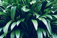 叶子在庭院,新绿色在庭院阳光把背景留在 绿色叶子纹理,蕨叶子在林园a 免版税库存图片
