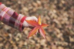 叶子在手上 库存图片