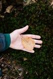 叶子在手中 库存图片
