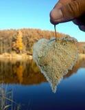 冻叶子在手中 库存图片