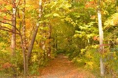 叶子在森林在秋天盖了道路 免版税图库摄影