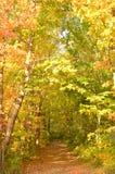 叶子在森林在秋天盖了道路 库存图片