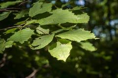 叶子在森林里 库存照片