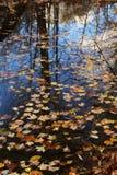 叶子在水中 库存照片