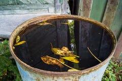 叶子在水中 库存图片