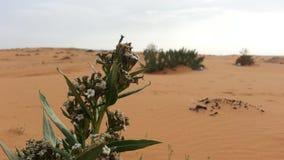 叶子在沙漠 免版税库存照片