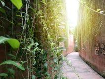 叶子在深堑侧壁的双方洒了 图库摄影