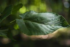 叶子在深森林 免版税库存照片