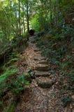 叶子在澳大利亚灌木的玉树森林里盖了道路 库存图片