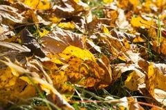 叶子在秋天公园 图库摄影