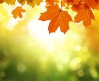 叶子在秋天森林里 库存照片