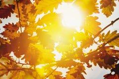 叶子在秋天森林里 免版税库存照片