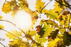 叶子在秋天森林里 图库摄影