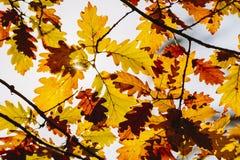 叶子在秋天森林里 免版税库存图片