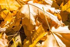 叶子在秋天 免版税图库摄影