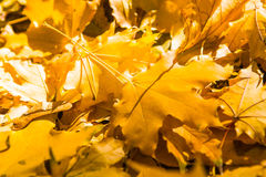 叶子在秋天 免版税库存图片