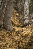 叶子在秋天 图库摄影