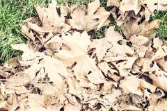 叶子在秋天 库存图片