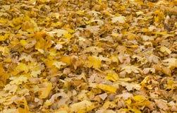 叶子在秋季森林里 库存图片