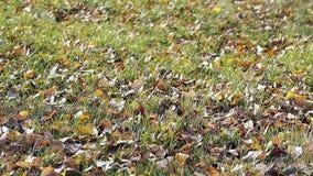 叶子在稀薄的草和微风打击说谎在好日子 影视素材