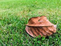 叶子在绿草烘干,变褐 免版税图库摄影