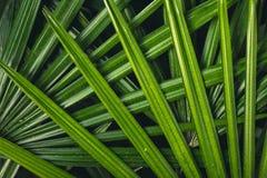 叶子在自然绿色新blackground构造 免版税库存图片