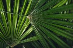 叶子在自然绿色新blackground构造 库存图片