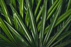 叶子在自然绿色新blackground构造 库存照片