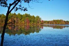 叶子在边疆公园 免版税库存图片