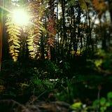 叶子在阳光下 库存照片